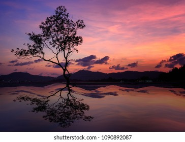 silhouette of big tree at beautiful twilight sky background,  reflection of tree.