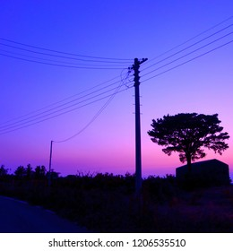 silhouette of big tree over an old barn next to electric poles with sagged wires at dusk in Jejudo, Korea