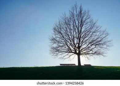 Silhouette of big tree and park benches on a hill top against the blue afternoon sky.
