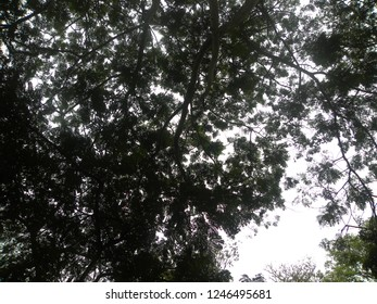 Silhouette of a big tree with sky on background