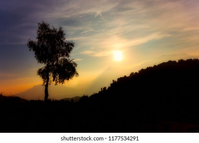 Silhouette of birch plant on the alps at sunset
