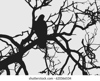Silhouette of a bird among the bare branches of an old pine