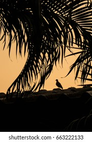 silhouette of a bird and coconut leafs in evening