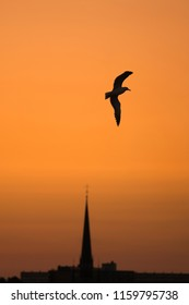 Silhouette of bird flying the the air during sunset.