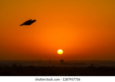 Silhouette of bird flying in the air during sunset