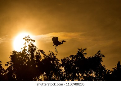 Silhouette of bird flying in front of the sun