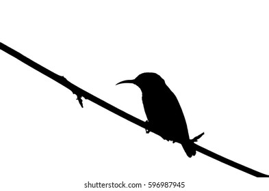 Silhouette of bird on branch. Black and white.