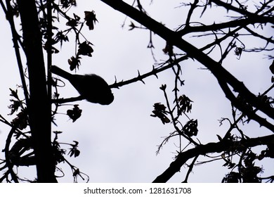 Silhouette of a bird on a branch, wallpapper, down up