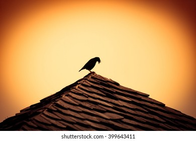 Silhouette of a bird on a gable roof.