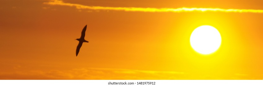 Silhouette bird with sun in the afternoon