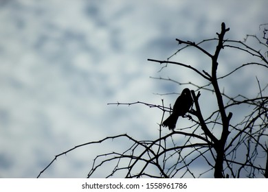 silhouette of bird and a Tree without leaves in a cloudy day