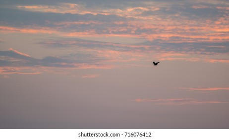 silhouette of birds fly in the twilight