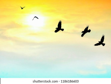 Silhouette birds are flying with blurred beautiful sunrise sky background on animals wildlife with peaceful and freedom concept, low angle view with copy space