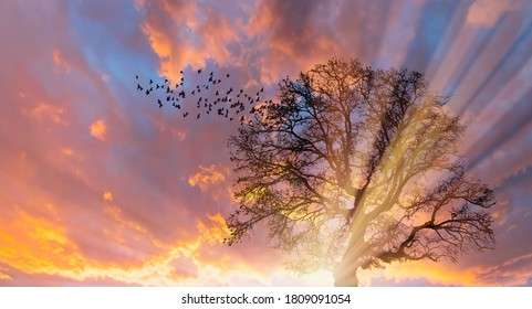 Silhouette of birds flying with lone dead tree at amazing sunset, sun rays in the background