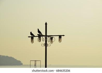 Silhouette of birds holding street lighting pole