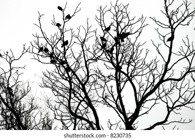 silhouette of  birds on the tree