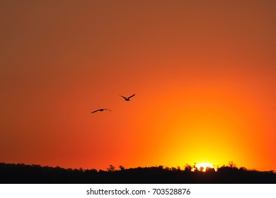 Silhouette of birds in orange sky at sunset