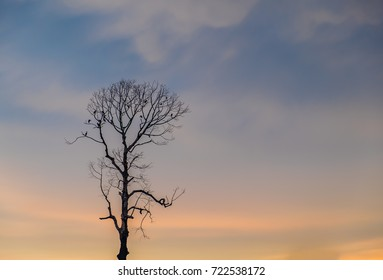 The silhouette of birds sitting on the branches of dried tree during twilight sky background