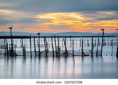 Silhouette of birds standing on poles at dusk in the Albufera in Valencia, a freshwater lagoon and estuary in Eastern Spain. Long exposure.
