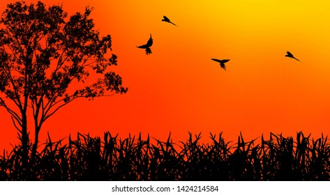Silhouette of birds and a trees with the sunset,beautiful orange color light  ,(photo blurred.)