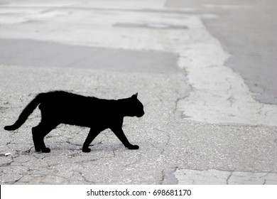 Silhouette of a black cat - an object of superstition of various peoples