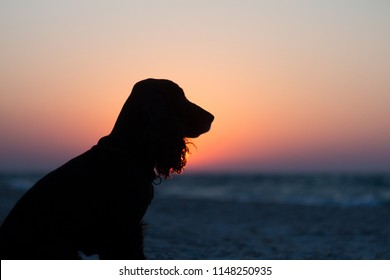 Silhouette of black english cocker spaniel dog. Dog sits and looks at golden sunset (sunrise) near the ocean. Dog sits on the beach near the sea. Backlight. Side face pose.