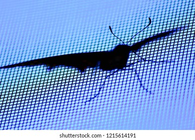 Silhouette of a black swallowtail butterfly #2.