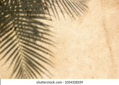 Silhouette black of tree branches-leaves with brown background, sunlight rays through wall concrete, It may look like shadow coconut or palm, photo of dried sand its beautiful leaf vein line tropical.