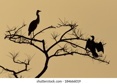 silhouette of blue heron and Cormorant.