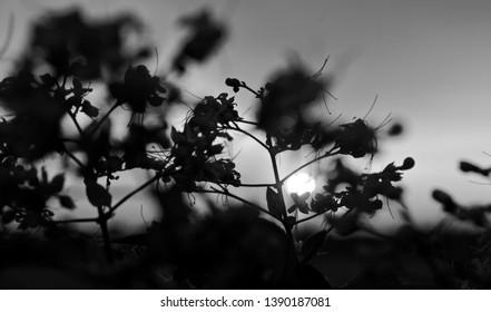 Silhouette blurry plants in a garden unique black and white photo