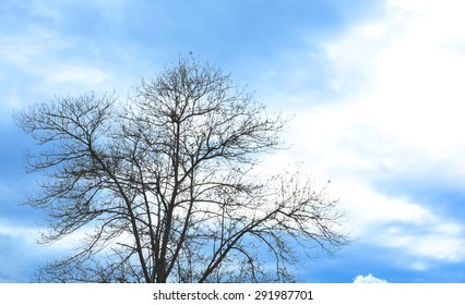 Silhouette branches