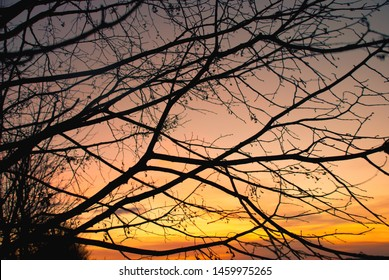 silhouette of branches against sunset