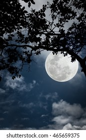 Silhouette of the branches of trees against the night sky in a moon. Beautiful landscape with bright moon in the night sky. Outdoors.