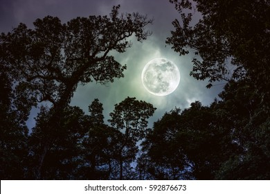 Silhouette the branches of trees against night sky with full moon on tranquil nature. Beautiful landscape with large moon, outdoors at nighttime. Vintage tone. The moon were NOT furnished by NASA.