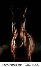 Silhouette of the brown horse with steam from nostrils isolated on black background