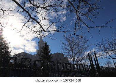 The silhouette of budding tree branch and trees in front of the Mormon LDS temple in Bountiful Utah