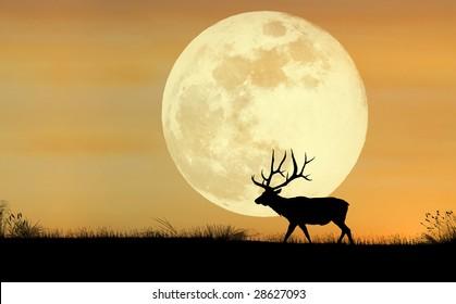A silhouette of a bull elk
