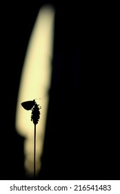 Silhouette of a butterfly in a glowing light