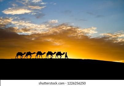 silhouette of camel caravan is going through the desert at sunset.Merzouga in Morocco, Sahara Desert, North Africa.