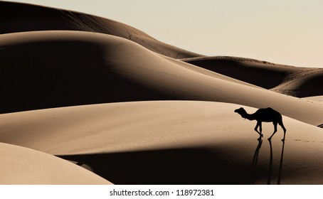 Silhouette of camel in the Sahara desert