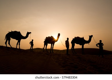 Silhouette of camels and guides