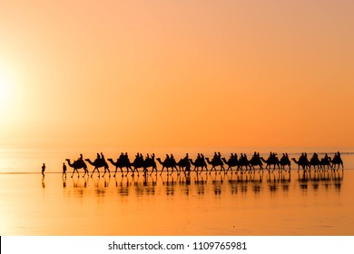 Silhouette of Camels and their reflections walking in a line at sunset on Cable beach in Broome