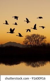 Silhouette of Canadian geese in flight at sunset over wild life refuge, San Joaquin Valley, California.