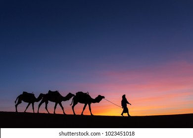 Silhouette of caravan in desert Sahara, Morocco with beautiful and colorful sunset in background