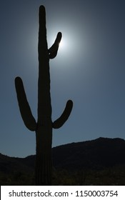A silhouette of Carnegjea gigantea, also called Saguaro is an arborescent (tree-like) cactus species which may grow over 40 feet high seen here in Sonoran Desert, Arizona, USA.