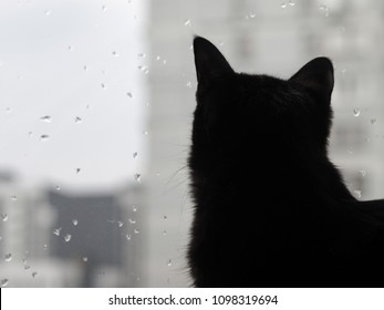 Silhouette of a cat on a window background. Black cat watching the raindrops on the glass