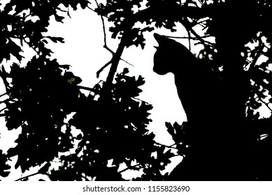 Silhouette Cat in a Tree