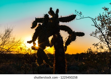 Silhouette of a Cholla Cactus at sunrise or sunset in the Sonoran Desert in Saguaro National Park in Tuscon, Arizona, USA