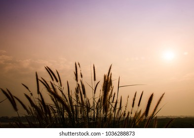 Silhouette of clump grass with copy  space on top,natural weed flower clump beside road in Beungkarn,Thailand at khong river separate Thailand and Loas border,nature background in morning  concept