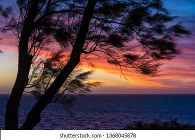 Silhouette of coastal needle tree against orange and red sunset at Indian Ocean in Shark Bay Western Australia